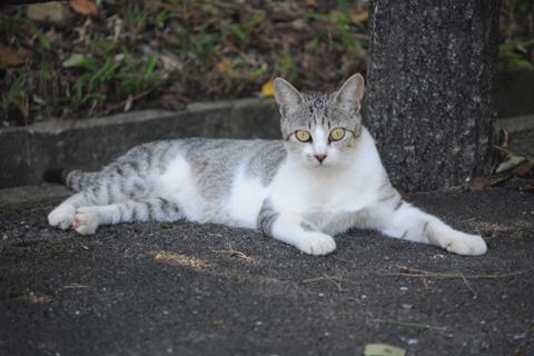 cat135s.jpg