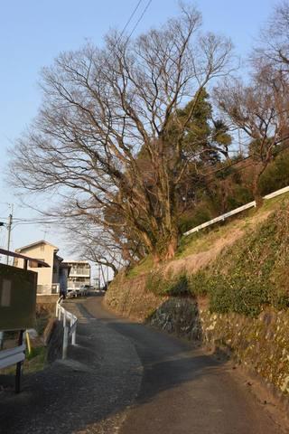 kumamoto162s.jpg
